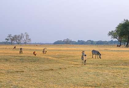 plaine de South Luangwa