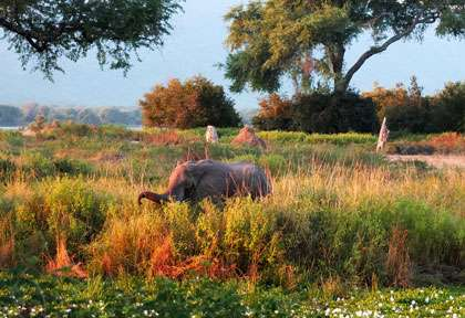 paysage de Mana Pools