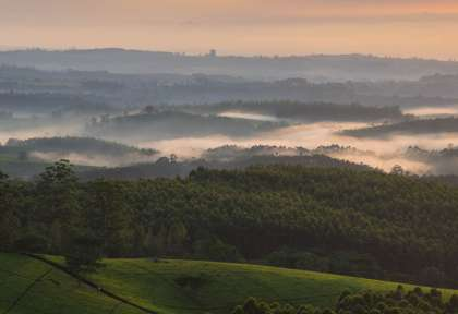 Brume sur Tea Estate ©Hundington House